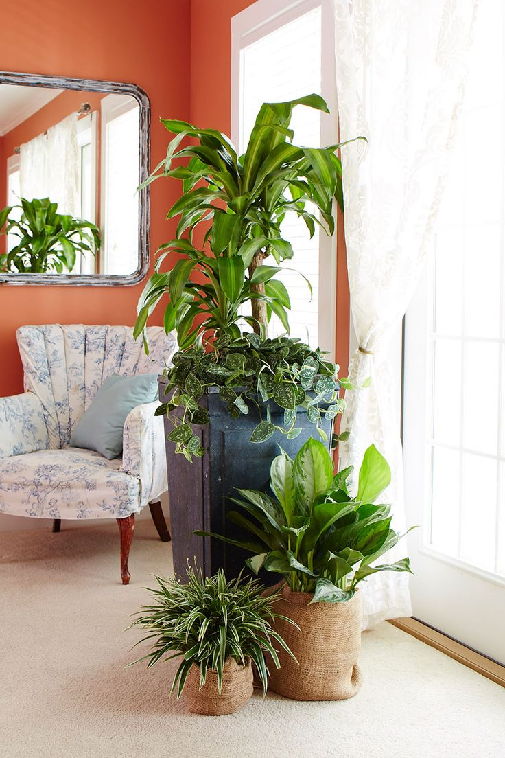 Plant Decoration In Living Room: 17 Best Images About Decorating With Houseplants On