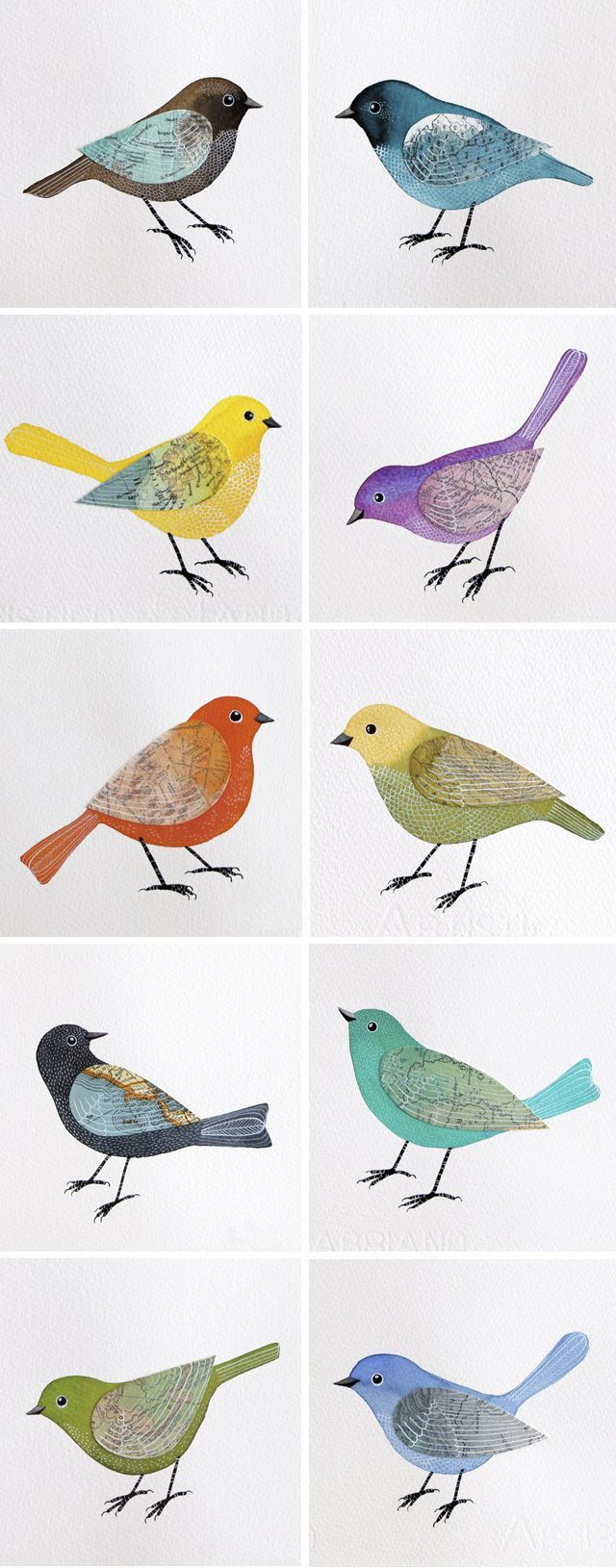 Beautiful Birds: