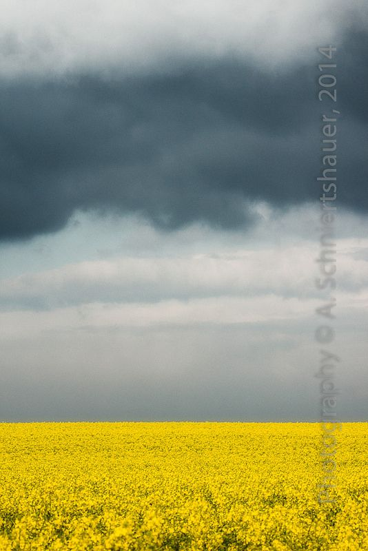 shades and tints of blue above yellow