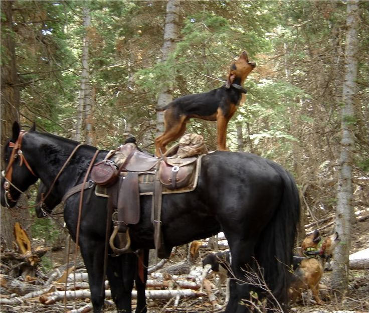 Patient Mule's Sons of Savages: Hunting Rigs