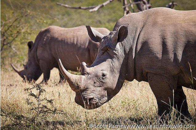 Hluhluwe-iMfolozi Game Reserve, KwaZulu-Natal, South Africa