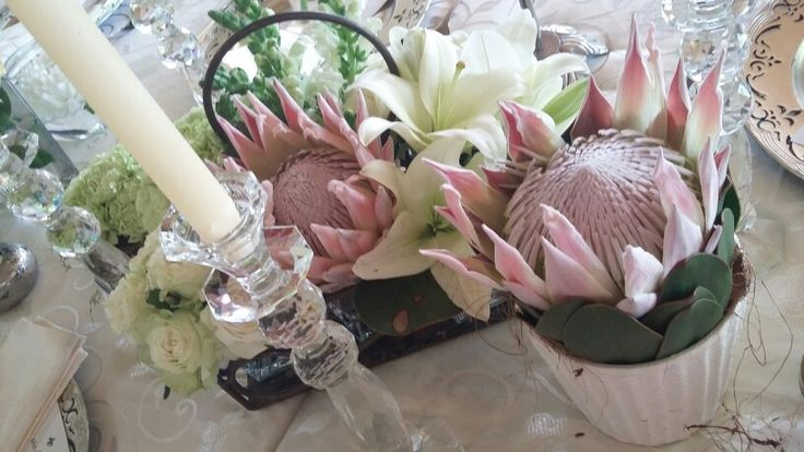 Proteas &Lilley's
