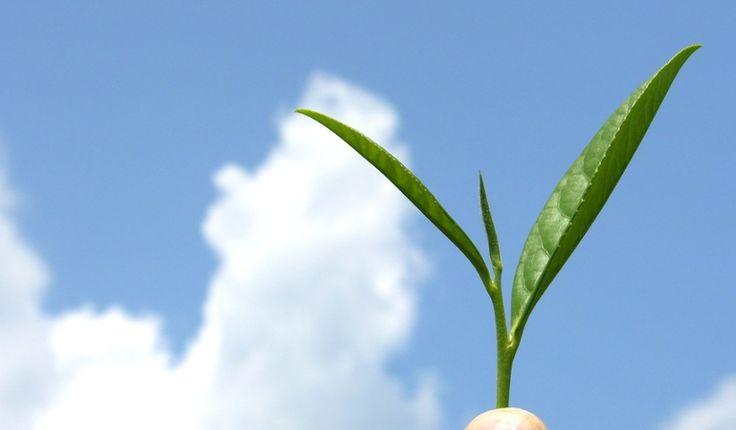 Τσάι – Ο φυσικός σύμμαχός μας Read more - http://www.solino.gr/wordpress/τσάι-ο-φυσικός-σύμμαχος-για-την-υγεία/