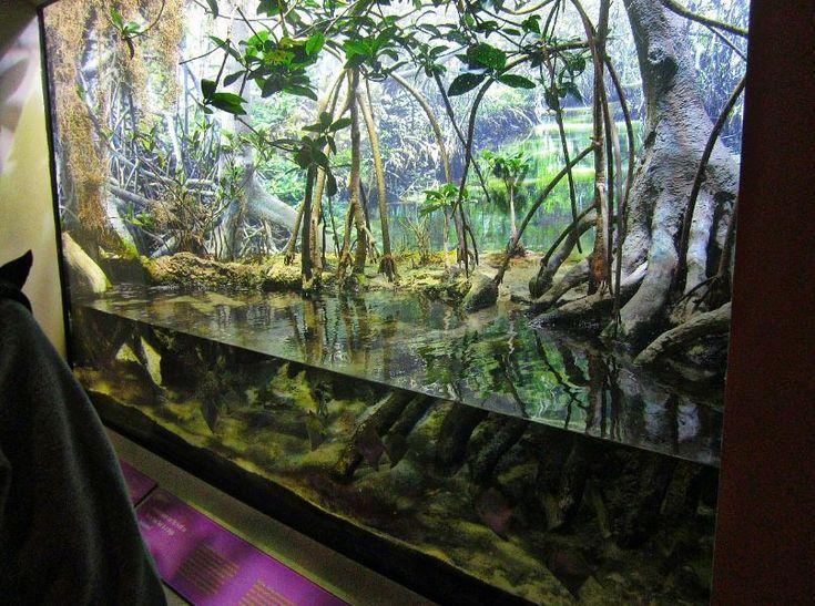 Mangrove Oceanarium Pinterest Mars Forests And Http