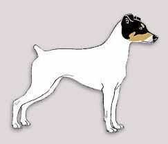 dibujos de perros fox terrier chilenos - Buscar con Google