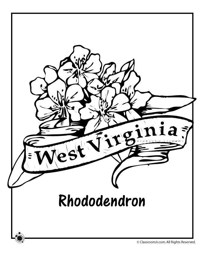 State Flower Coloring Pages West Virginia Page Clroom Jr
