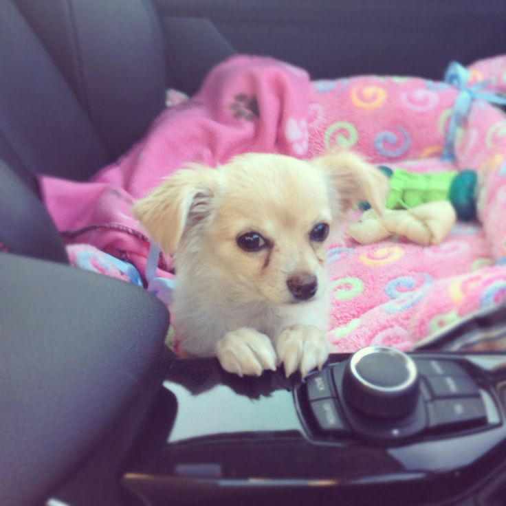 Car ride earlier this week. The little paws make my face crumple up from the cuteness.