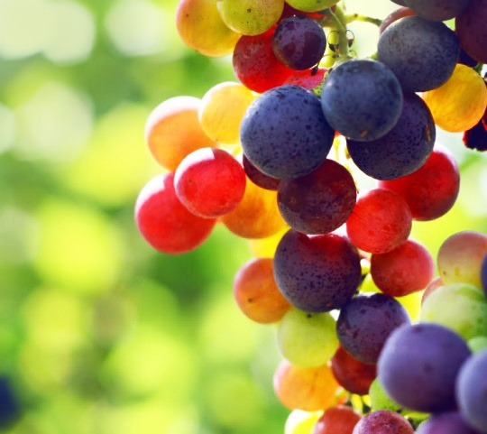Grapes. Benefits of eating grapes and facts about drinking red wine. Nutrition and health. http://www.benefitsofeating.com/grapes/