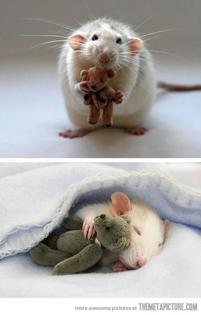 I don't like mice, but this one and his Teddy bear are welcome anytime!