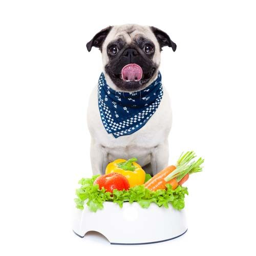 Dog Food for Dogs with Diabetes: What You Need to Know | Top Dog Tips