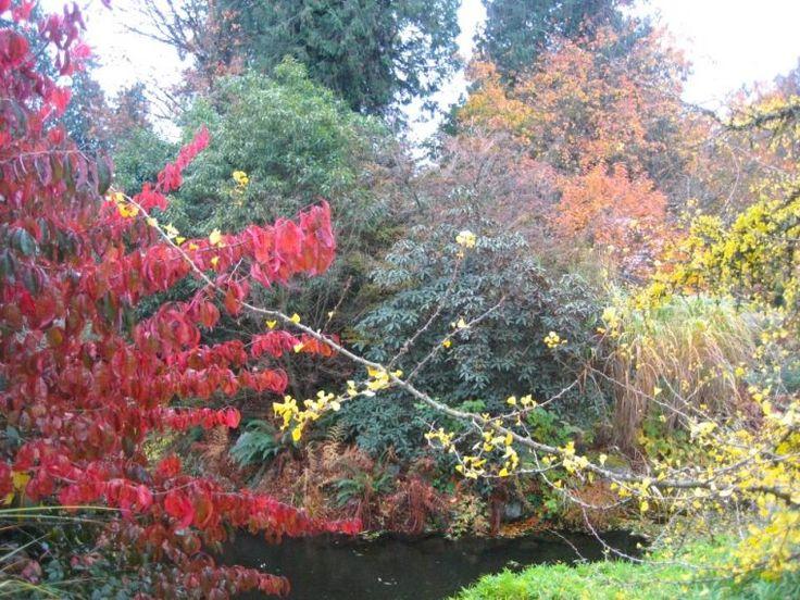 UBC botanical autumn #exploreBC #exploreBCgardens #gardentourism