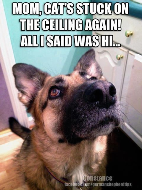 Funny GSD