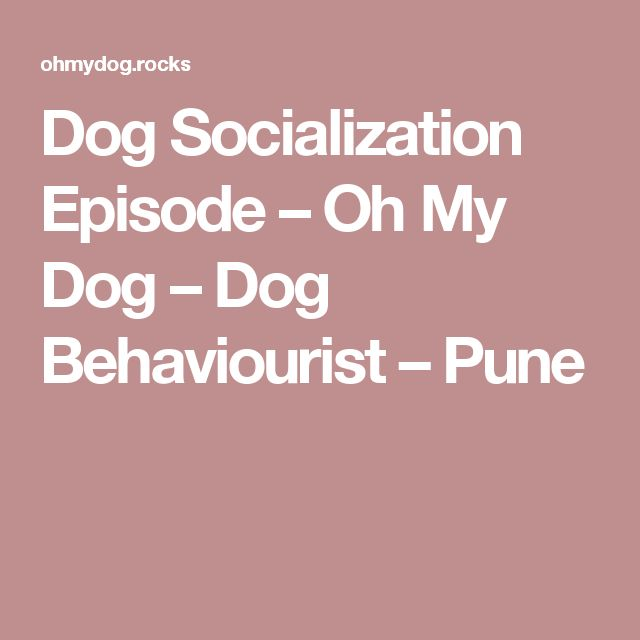 Dog Socialization Episode – Oh My Dog – Dog Behaviourist – Pune