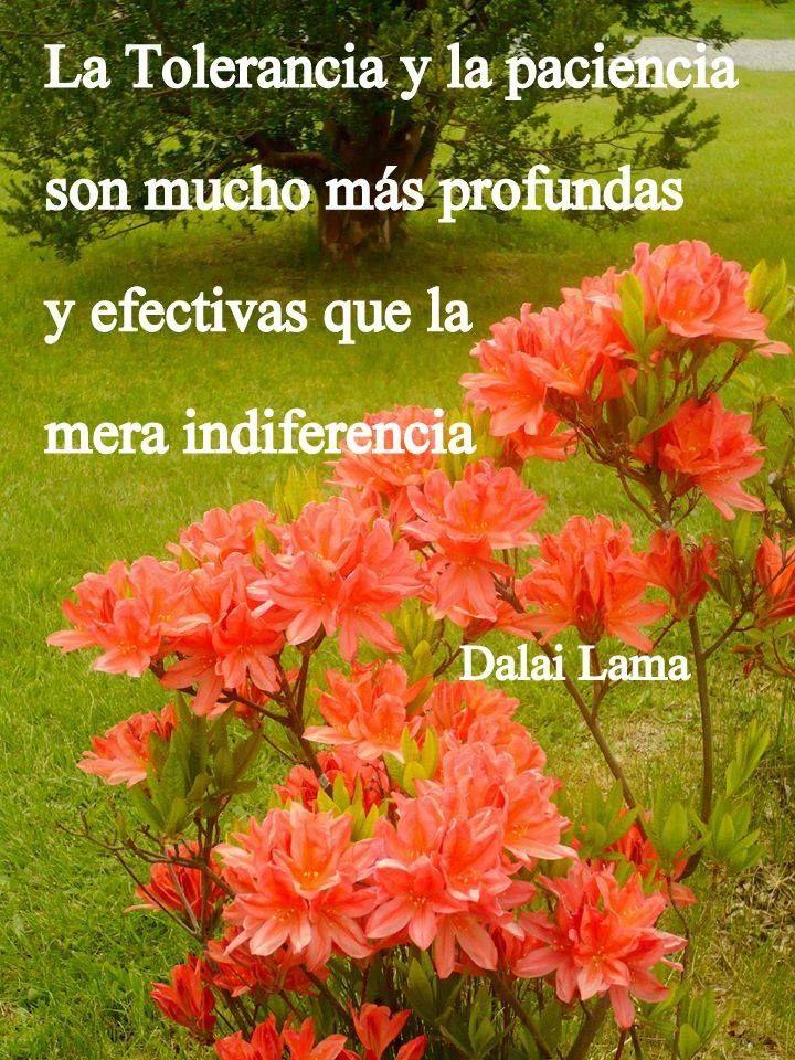 La Tolerancia y la Paciencia son mucho más profundas y efectivas que la mera indiferencia. - Dalai Lama