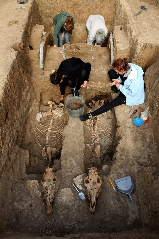Another view of the recent discovery of a 2,500-year-old Thracian tomb with an intact chariot and the remains of two horses buried in an upright position..