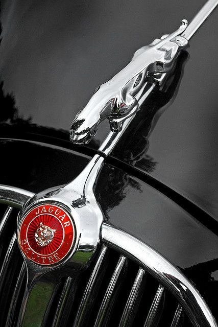 UK Oxon Blenheim Car Show Jaguar Detail | Car photo