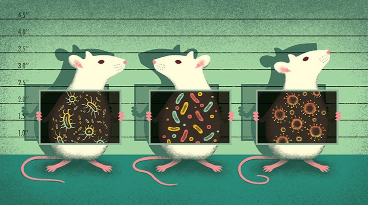 Davide Bonazzi - Of mice and reproducible research. Client: Science magazine. #conceptual #editorial #illustration #science #mice #research #bacteria #microbes #reproducibility www.davidebonazzi.com