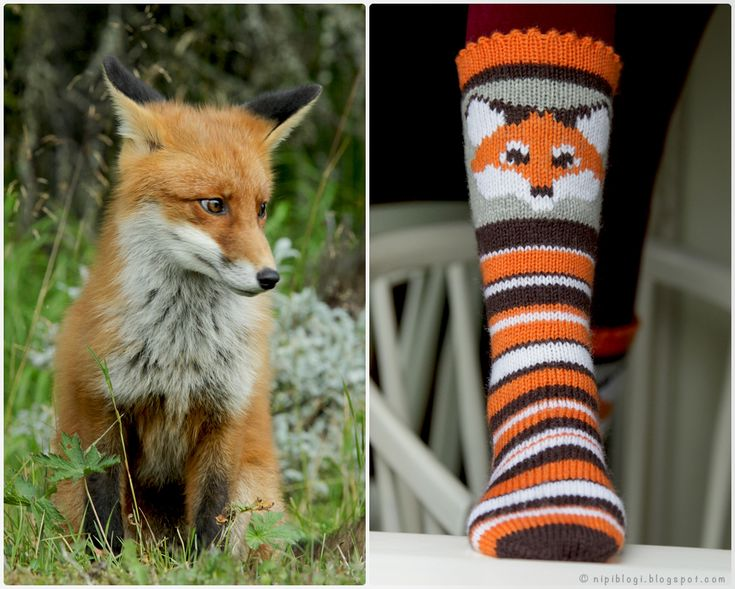 NIPI: What does the fox say?