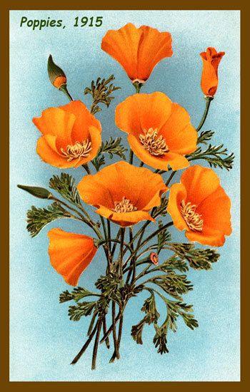 Olde America Antiques | Quilt Blocks | National Parks | Bozeman Montana : Flowers - California Poppies 1