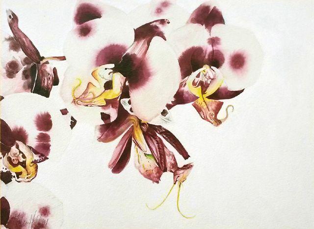 Art by Melissa Halley, Orchid Mantis, 2015, Pencil & ink on aquabord, 18 x 24 cm