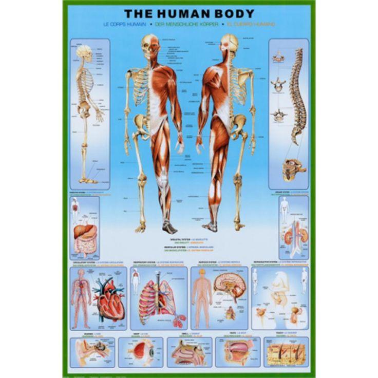 Human Body (Chart) Art Poster Print   Quinnipiac University Dorm Room Decor    OCM Part 66