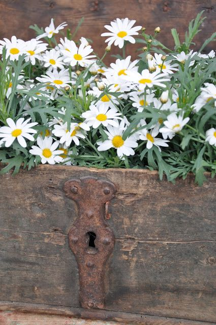 Ana Rosa. Love the daisies in the old trunk! So very pretty.