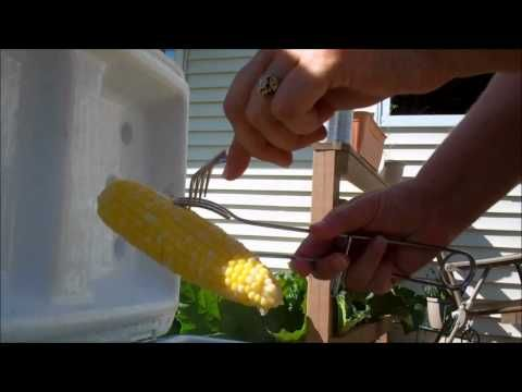 Looking for a way to make corn on the cob for a large group?  Have you ever tried making cooler corn?  You can fill a cooler with as much corn on the cob as it can hold and it will be completely done cooking in a half an hour.  Perfect for your summer cookouts.