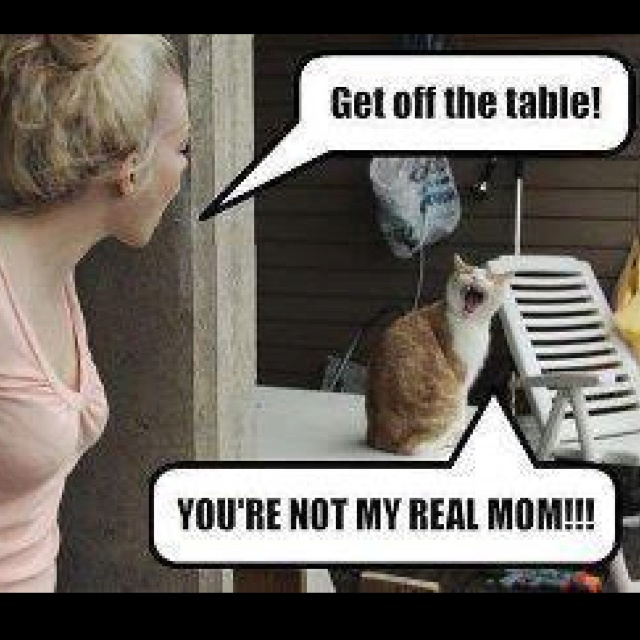 Heehee!Realmom, Funny Cat, Make Me Laugh, Funny Stuff, Humor, Real Mom, So Funny, Kitty, Giggles