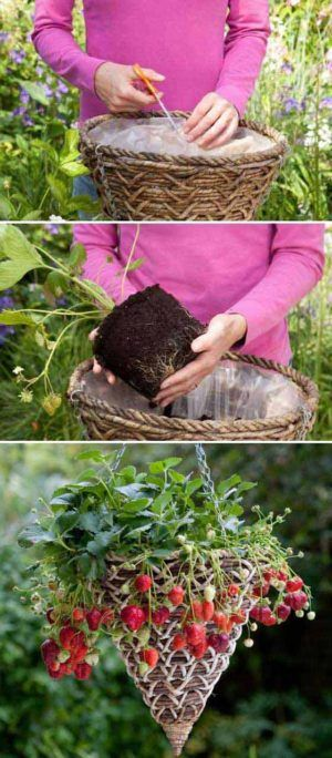 Top 26 Exciting Ideas To Grow Potted Veggies and Fruits – gardening