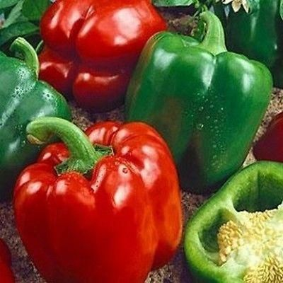 Pepper California Wonder Seeds (Capsicum Annuum) 50+Seeds - Under The Sun Seeds - 2