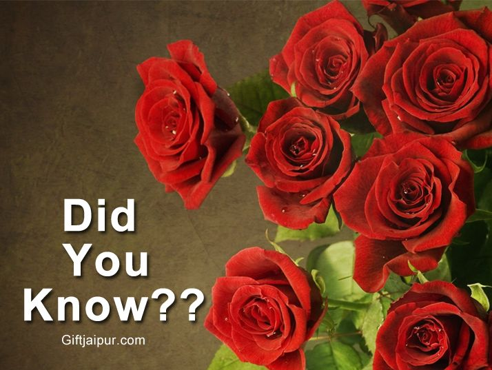 Two thousand flowers of rose are needed to produce one gram of rose oil.