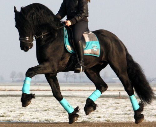 showjumpingpassion:  LOVE this