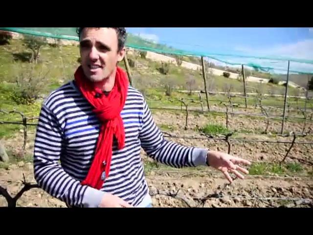Cada vez son más los aficionados a la viticultura que se atreven a elaborar su propio vino. Así comenzó el hoy reputado Dominio de Pingus .