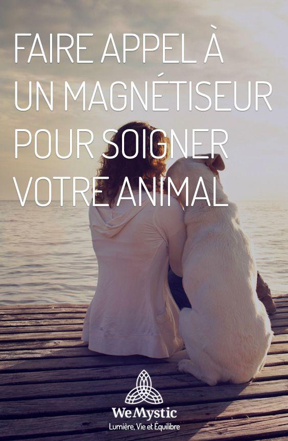 Faire appel à un magnétiseur pour soigner votre animal – WeMystic France