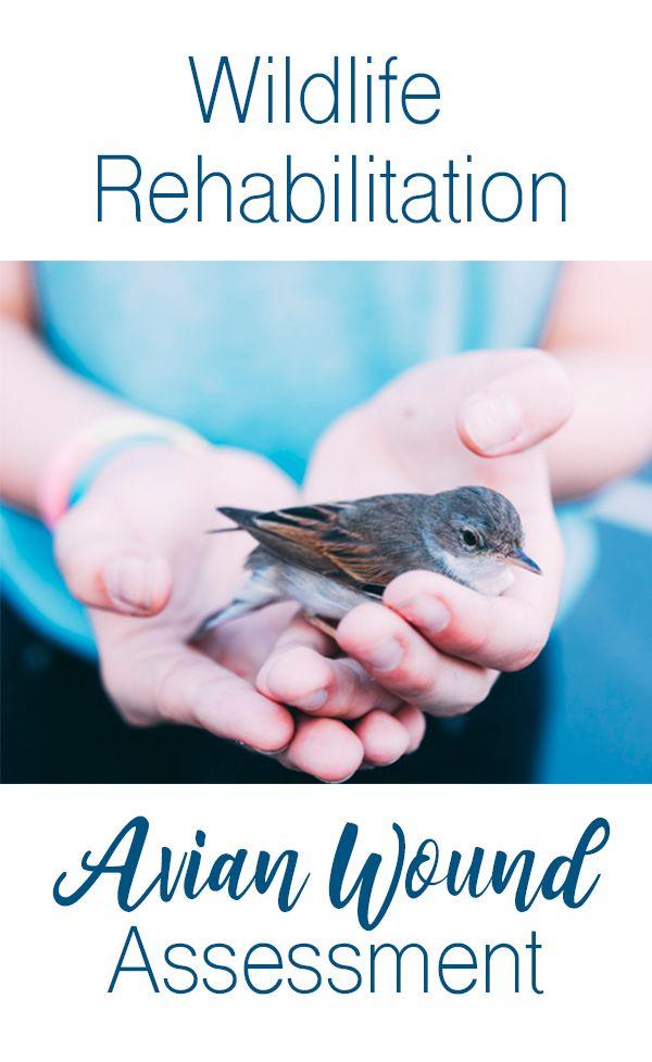 How To Assess An Injured Bird Wildlife Rehabilitation Wildlife Rehabber Licensed Wildlife Rehab Resource Wildlife Rehabilitation Wildlife Rehabilitation