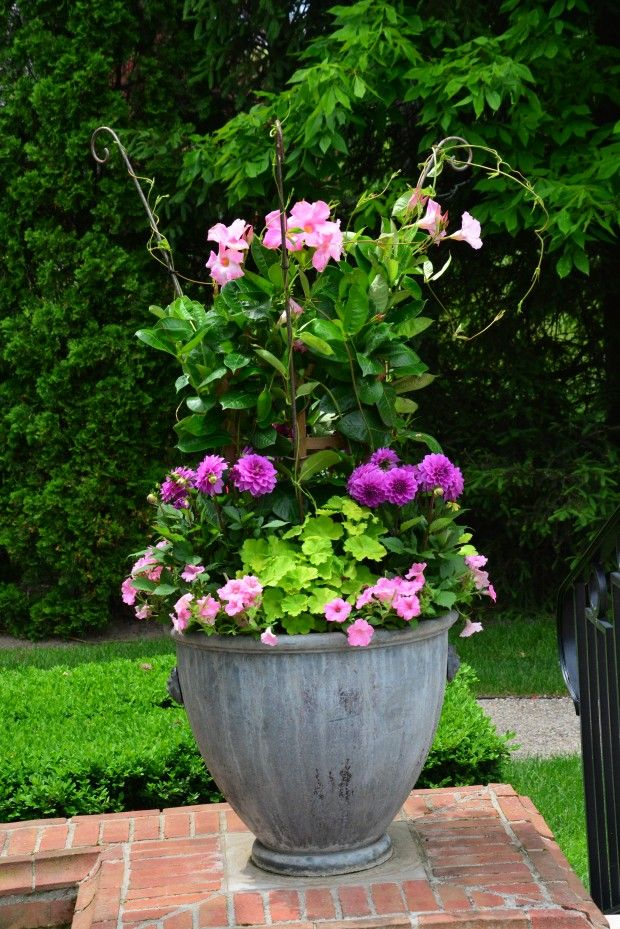 The 102 best Container garden ideas images on Pinterest | Container ...