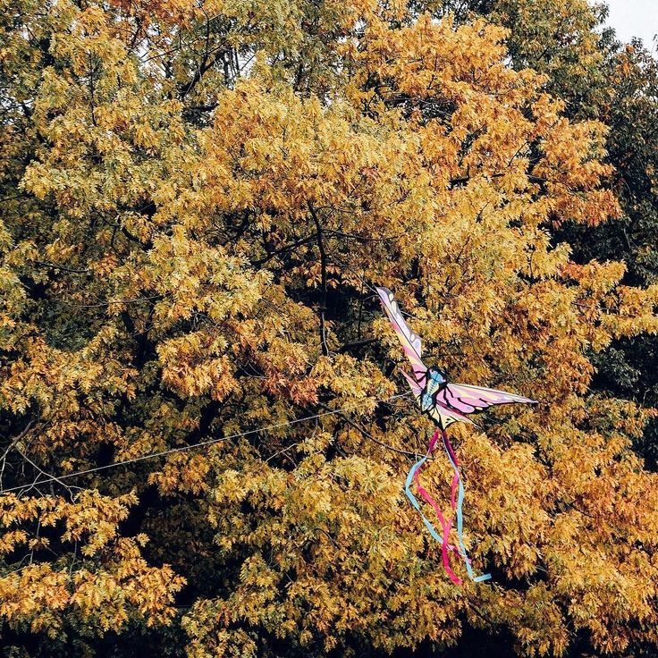 Freedom is a state od mind  . Taki jesienny kolorowy 'ptaszek' złapany wśród drzew w parku  . . . . #warsaw360 #warsaw #warszawa #autumnvibes #autumn #autumncolors #uwielbiamwarszawe #lubiepolske #jesień #warsawlife #polemokotowskie #mokotow #mokotów #igwarsaw #instawarsaw #instawarszawa  #igerswarsaw #igerswarszawa #warszawa_love