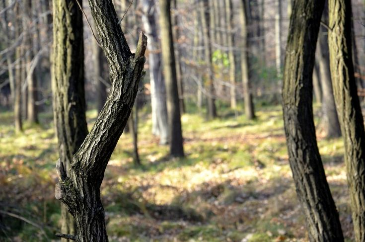 Jesienny spacer Natura 2000  #fall #leaves