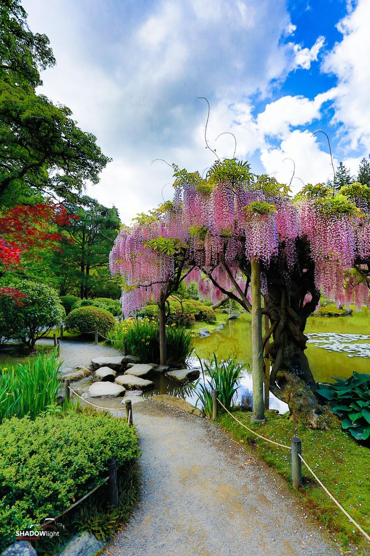 beautiful hawaiian zen garden - photo #43