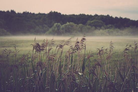 quiet meadow by MalgoS