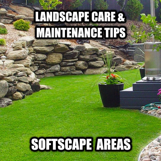 How to make your grass look amazing, and other highly useful tips for your spoftscaping that will make your yard...