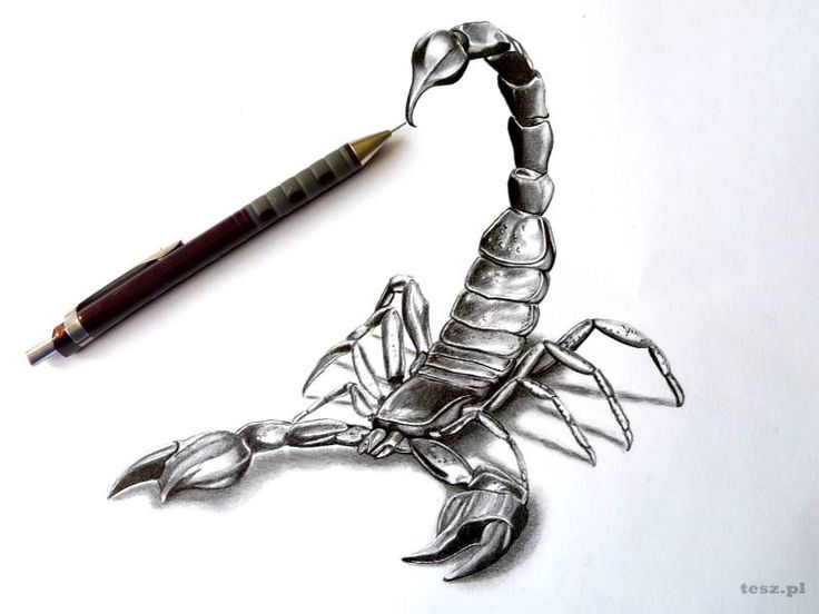 скорпион эскиз картинки помощи плагинов