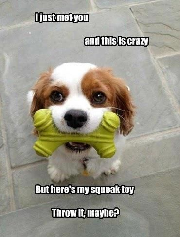 I just met you and this is crazy but here's my squeak toy throw it maybe?