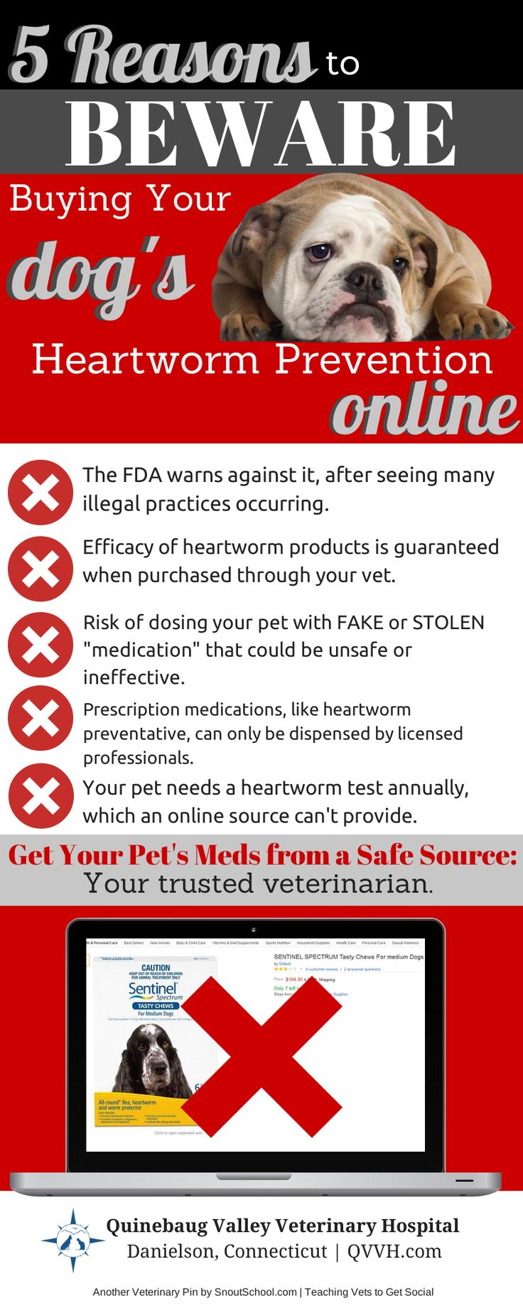 1000 Images About Heartworm On Pinterest