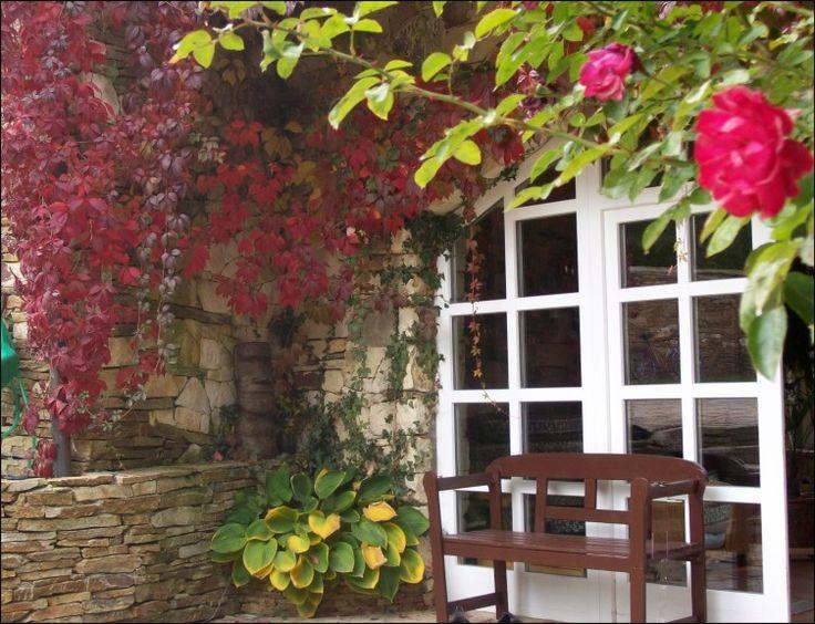 Přísavník a popínavé růže jsou vhodnou rostlinou ke kameni