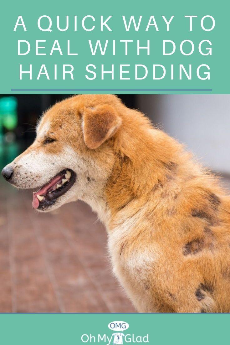 How To Stop Dog Hair Shedding Hair Shedding Dog Shedding Dogs