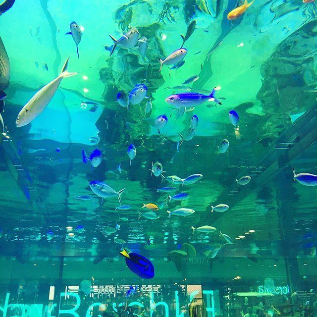 【megu.ru】さんのInstagramをピンしています。 《#アクアリウム #イオンモール #ライカム #沖縄 #魚 #グルクン #食べたい w》