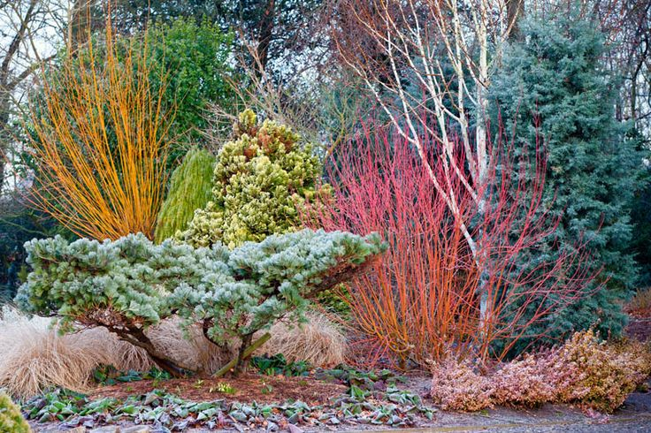 Winter Colour at Bressingham Gardens #flowers #winterflowering #garden photography #gardens #garden ideas #frosty plants #colourful plants in winter