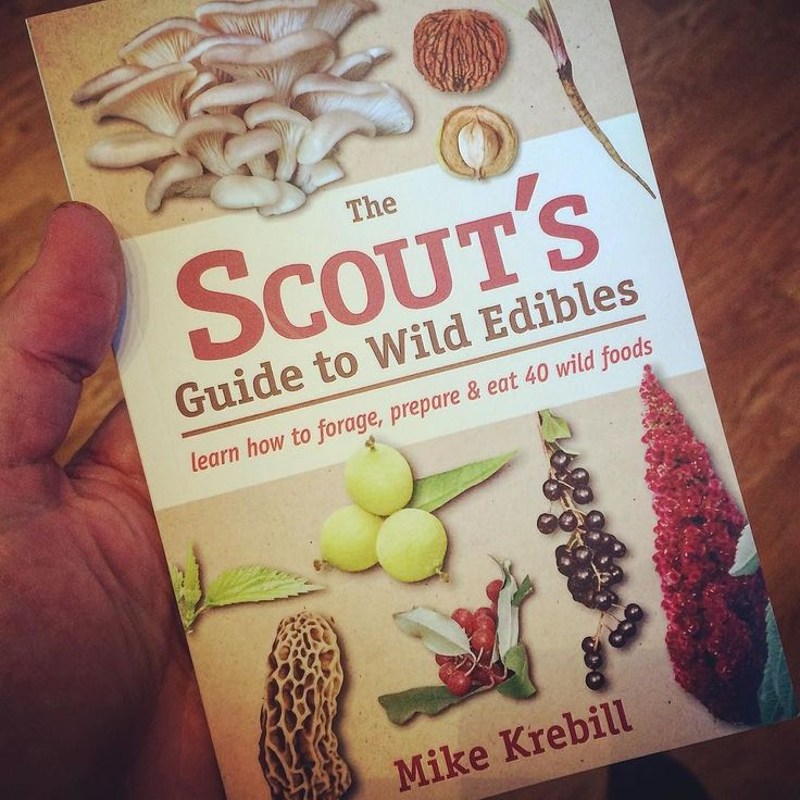 Enjoying a review copy of The Scout's Guide to Wild Edibles by Mike Krebill. Thanks @stlynnspress //