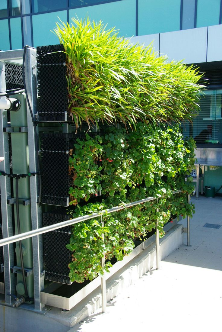 Livewall green wall system make conferences more comfortable - Green Walls Herb Garden Helpful Tips Landscaping